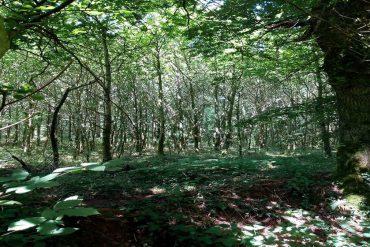 Reiki timer Om 21×3 minutes Bruits de la Forêt (Auto-traitement 1er degré ou Traitement complet) – Vidéo